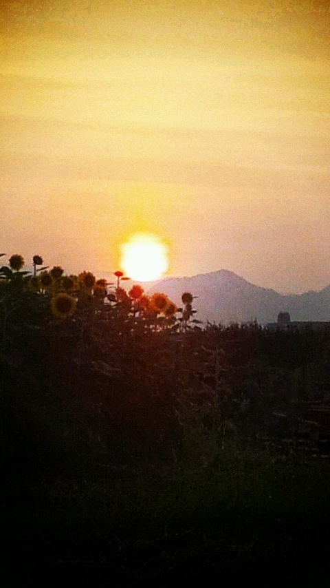 cent_sun.jpg